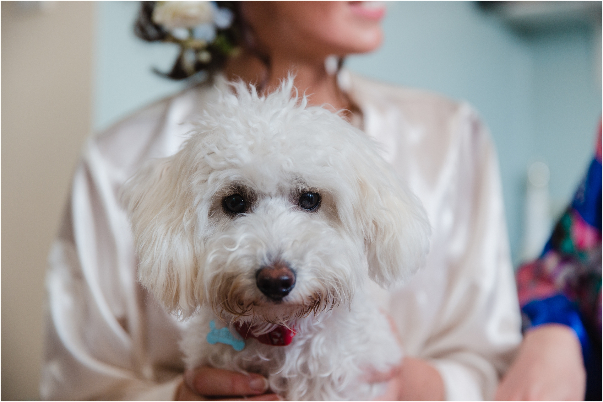 family pet on a wedding day