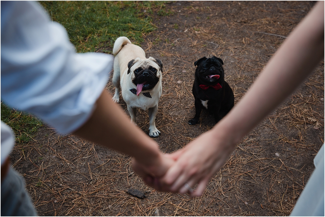 pugs in an engagement shoot