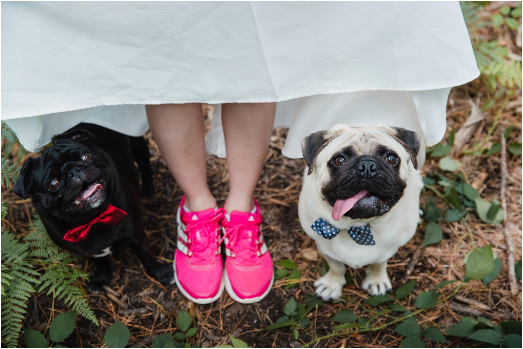 engagement session with pugs